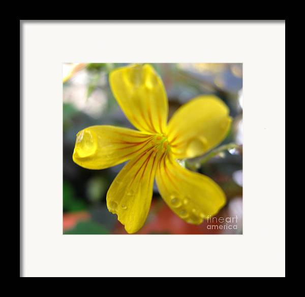 Flower Framed Print featuring the photograph Blooming Clover by PJ Cloud