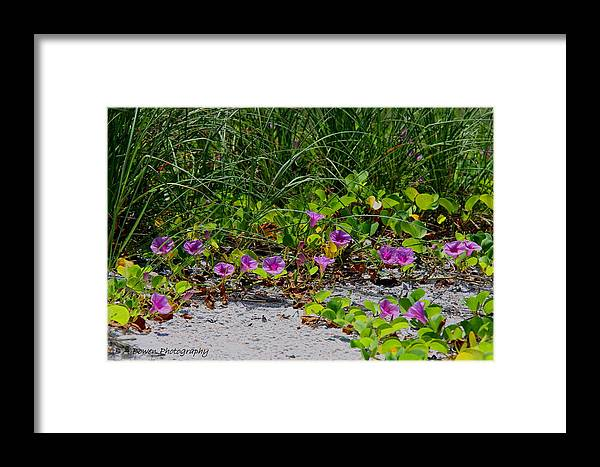 Cross Vines Framed Print featuring the photograph Blooming Cross Vines Along The Beach by Barbara Bowen