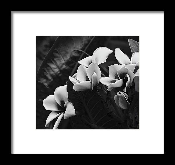 Blooms Framed Print featuring the photograph Blooms by Wilma Birdwell