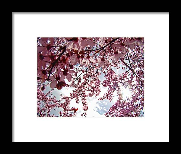 Tree Framed Print featuring the photograph Blossom Artwork Spring Flowers Art Prints Giclee by Baslee Troutman