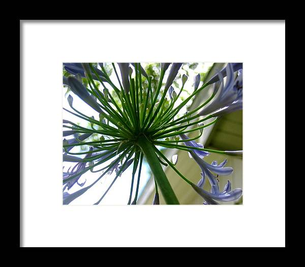 Photograph Framed Print featuring the photograph Blossom Explosion by Lindsey Orlando