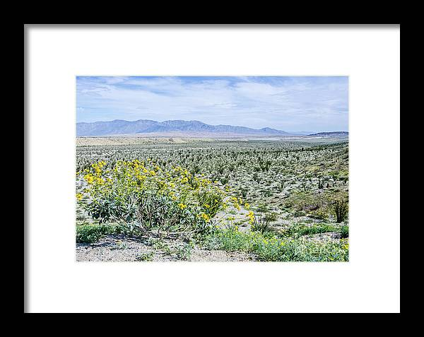 Wildflowers Framed Print featuring the photograph Blossom Time by Jerry Sellers