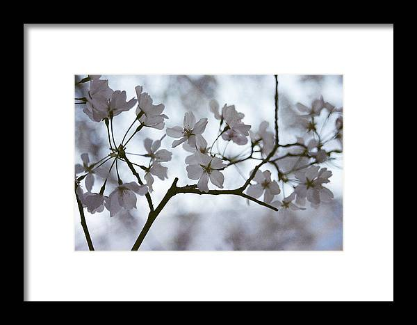 Bloom Framed Print featuring the photograph Blossoms by Jesse Kilmon