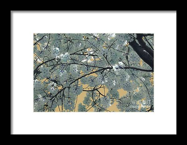 Blossoms Framed Print featuring the photograph Blossoms by Katherine Morgan