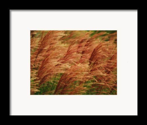 Win Framed Print featuring the photograph Blowing In The Wind by Gaby Swanson