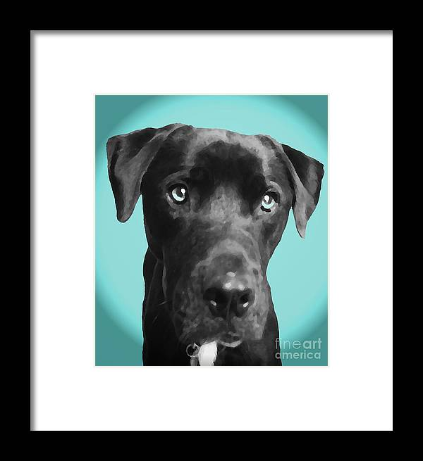 dog Art Framed Print featuring the photograph Blue by Amanda Barcon