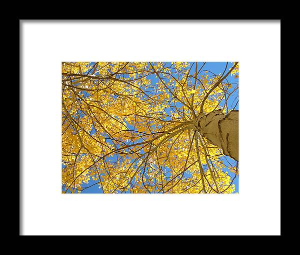 Aspen Framed Print featuring the photograph Blue And Gold II by Brian Anderson