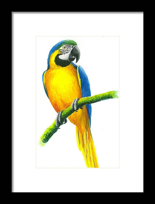 Chris Cox Framed Print featuring the painting Blue And Gold Macaw by Christopher Cox