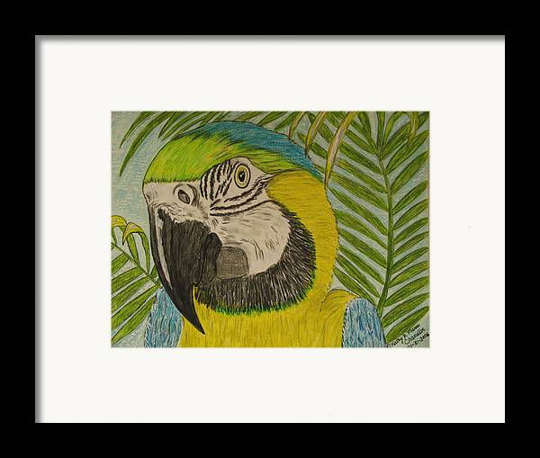 Macaw Framed Print featuring the painting Blue And Gold Macaw Parrot by Kathy Marrs Chandler