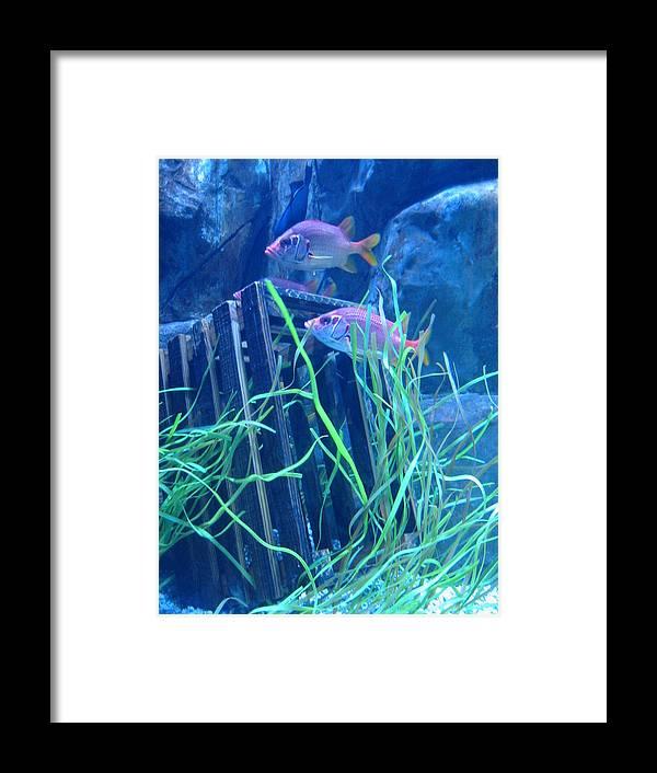 Fish Framed Print featuring the pyrography Blue Aquarium by Myrna Salaun