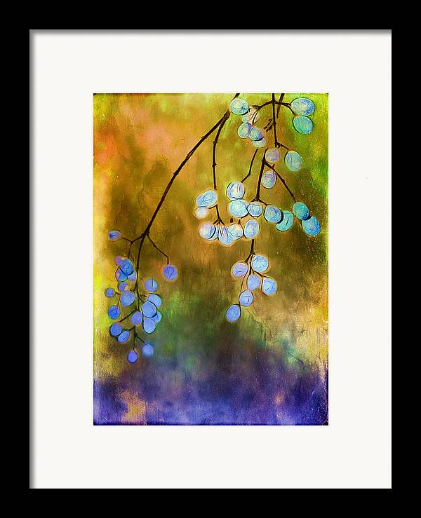 Berries Framed Print featuring the photograph Blue Autumn Berries by Judi Bagwell