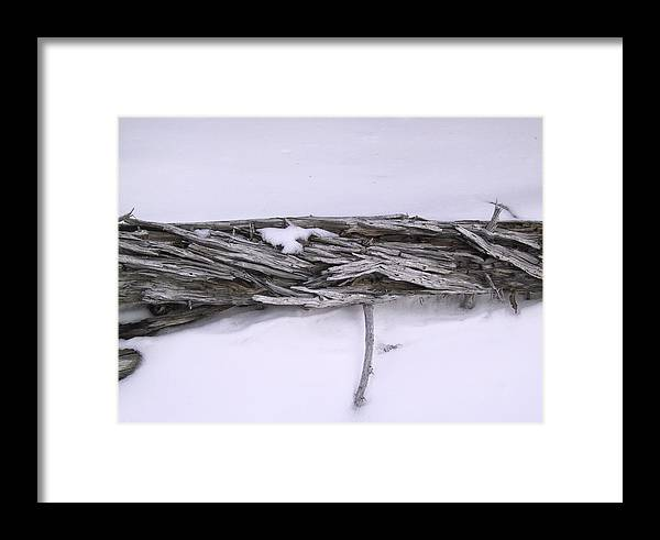 Tree Framed Print featuring the photograph Blue Banff-14 by Kevin Callahan