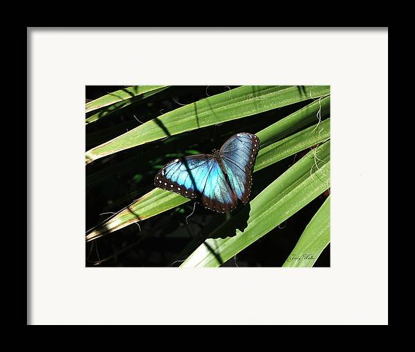Blue Framed Print featuring the photograph Blue Beauty by Judy Waller