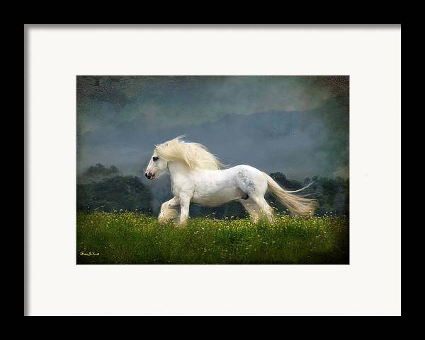 Horses Framed Print featuring the photograph Blue Billy C1 by Fran J Scott