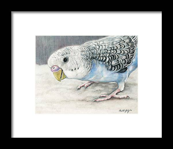 Bird Framed Print featuring the painting Blue Budgie by Charlotte Yealey