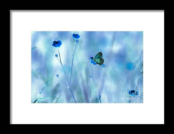 Flowers Framed Print featuring the photograph Blue Buttercups by Heather Hubbard