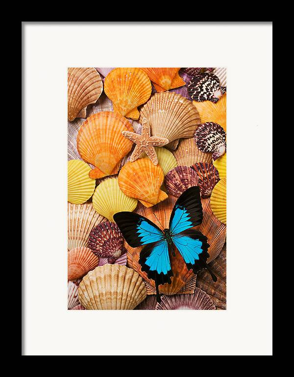 Butterfly Framed Print featuring the photograph Blue Butterfly And Sea Shells by Garry Gay