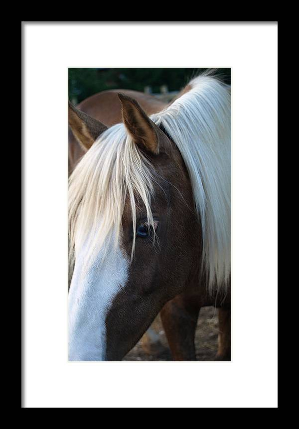 Palomino Framed Print featuring the painting Blue Eye by Kim