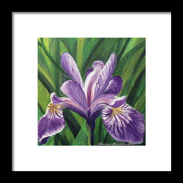 Blue Flag Iris Framed Print featuring the painting Blue Flag Iris by Sharon Marcella Marston