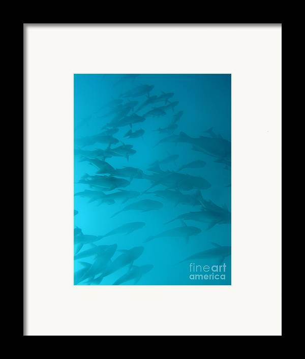 Underwater Framed Print featuring the photograph Blue Flash by Chad Natti
