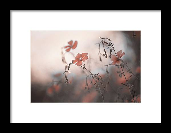 Jenny Rainbow Fine Art Photography Framed Print featuring the photograph Blue Flax Flower. Aliens by Jenny Rainbow