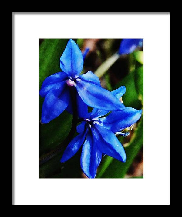 Digital Photo Framed Print featuring the photograph Blue Floral by David Lane