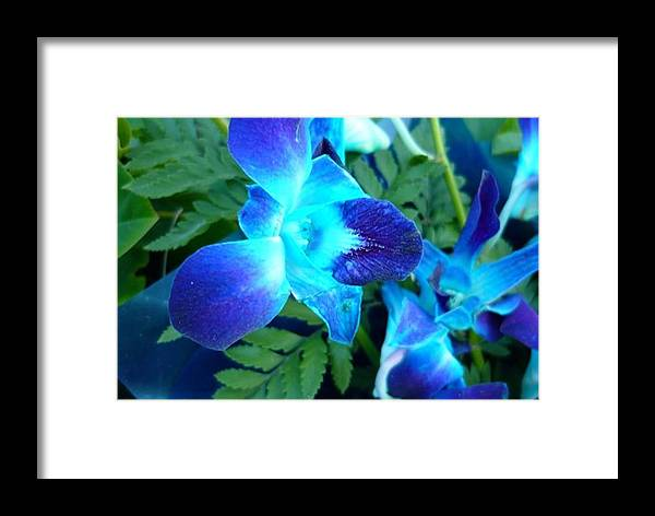 Blue Flowers Flora Landscape Photo Art Digital Canvas Print Best William Ballester Leaves Framed Print featuring the photograph Blue Flowers by William Ballester