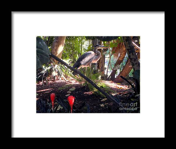 Blue Heron Framed Print featuring the photograph Blue Heron Haven by Terri Mills