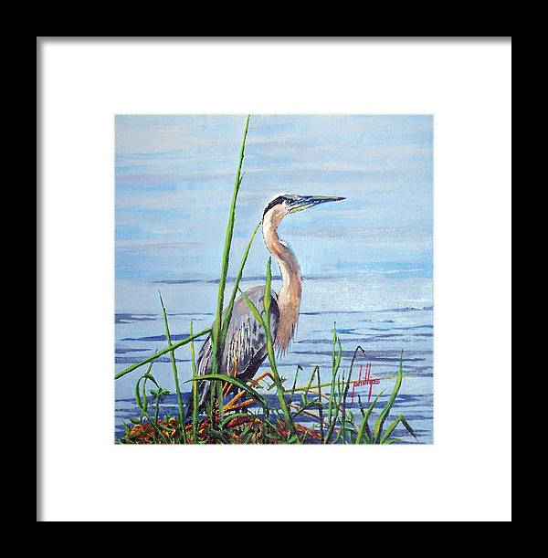 Heron Framed Print featuring the painting Blue Heron by Jim Phillips