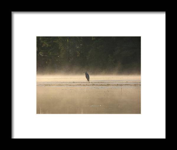 Blue Heron Water Fog Framed Print featuring the photograph Blue Heron Morning by Christopher Brown