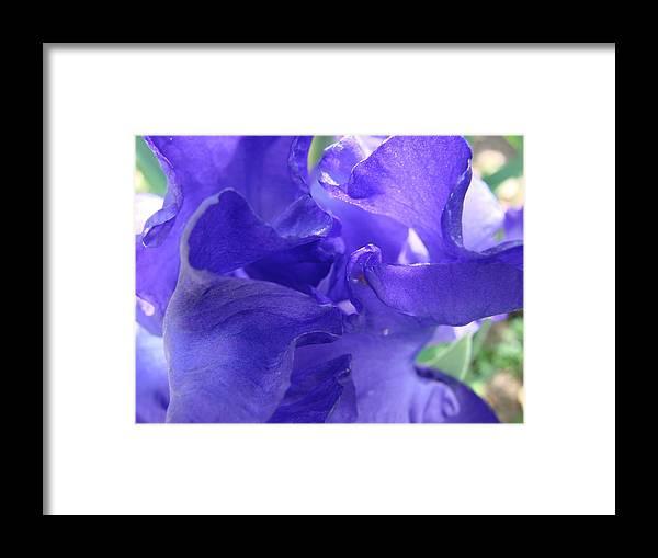 Iris Framed Print featuring the photograph Blue Iris by Liz Vernand