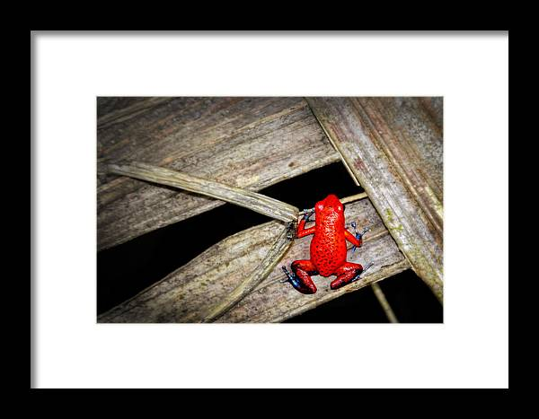 Blue Jeans Frog Framed Print featuring the photograph Blue Jeans Frog by Carolyn Derstine