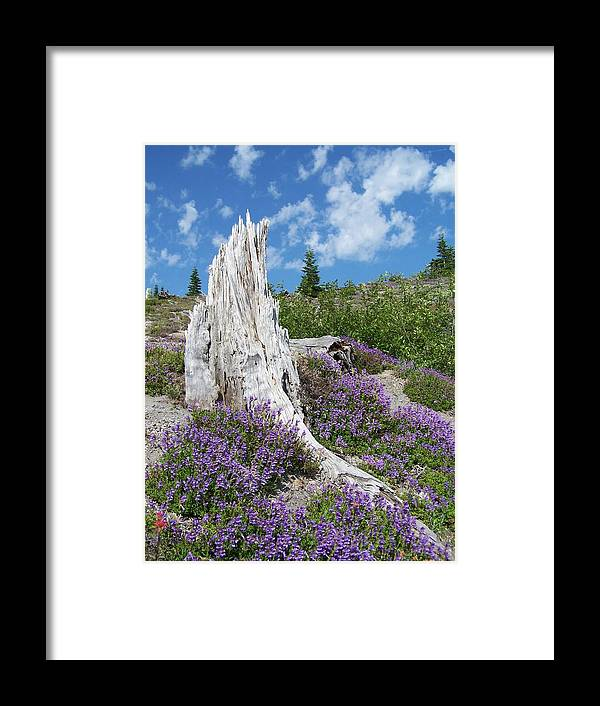 Tree Stump Framed Print featuring the photograph Blue Lupine by Gene Ritchhart