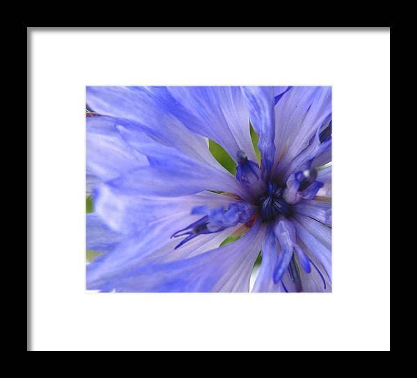 Flower Framed Print featuring the photograph Blue Princess by Rhonda Barrett