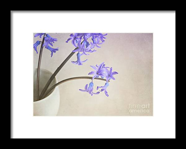 Still Life Framed Print featuring the photograph Blue Purple Flowers In White China Cup by Lyn Randle