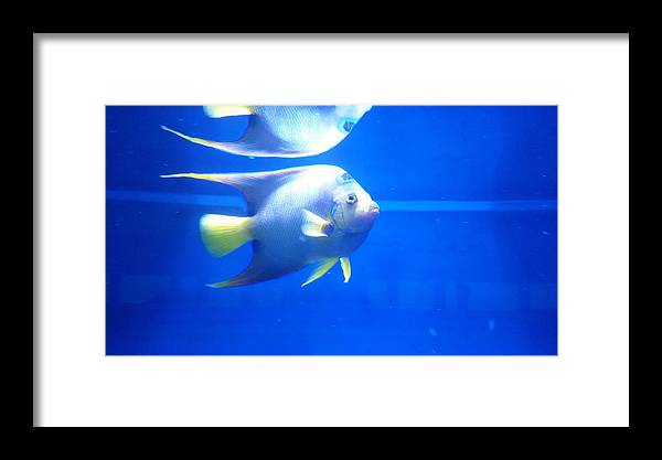 Fish Framed Print featuring the photograph Blue Reflections by Donald Hazlett