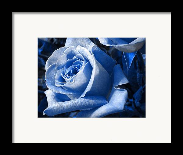 Blue Framed Print featuring the photograph Blue Rose by Shelley Jones