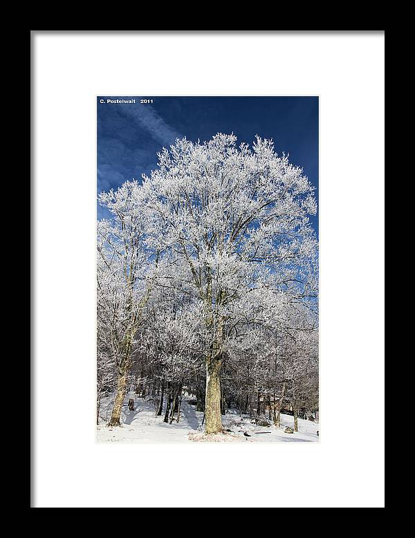 Sky Framed Print featuring the photograph Blue Sky and Ice Trees by Carolyn Postelwait