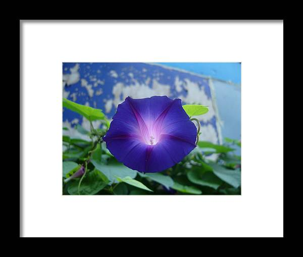 Flowers Framed Print featuring the photograph Blue Teefull by Jim Beer