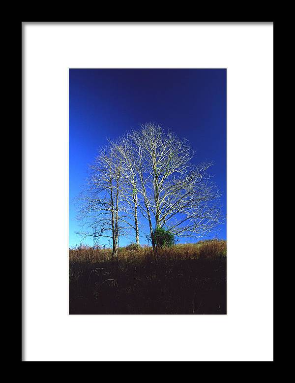 Landscape Framed Print featuring the photograph Blue Tree In Tennessee by Randy Oberg