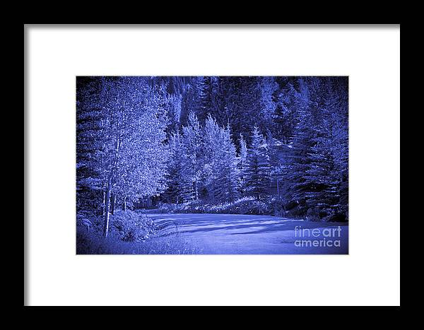 Trees Framed Print featuring the photograph Blue Vail by Madeline Ellis