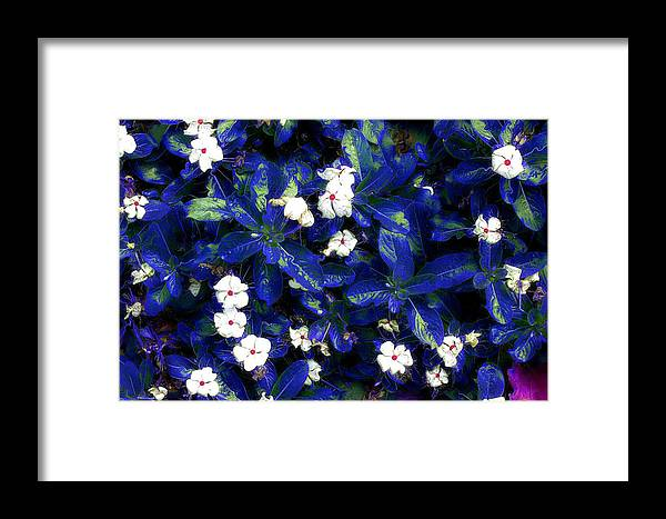 Flowers Framed Print featuring the mixed media Blue White I by Terence Morrissey