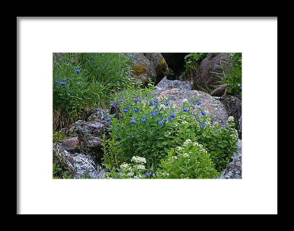 Wildflowers Framed Print featuring the photograph Bluebells by Heather Coen