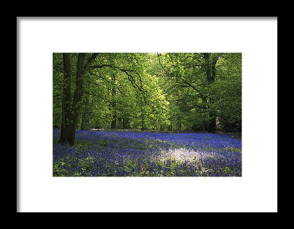 Bluebells Framed Print featuring the photograph Bluebells by Phil Crean