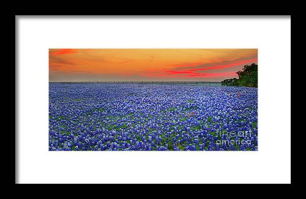 Texas Bluebonnets Framed Print featuring the photograph Bluebonnet Sunset Vista - Texas landscape by Jon Holiday