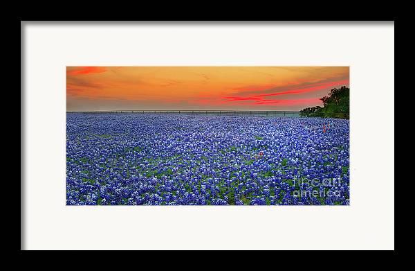 Texas Bluebonnets Framed Print featuring the photograph Bluebonnet Sunset Vista - Texas Landscape by Jon Holiday