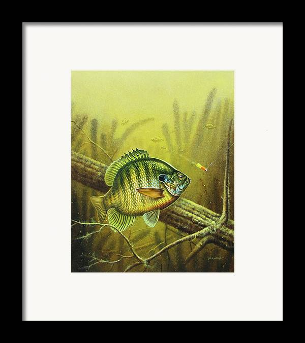 Jon Q Wright Framed Print featuring the painting Bluegill And Jig by JQ Licensing