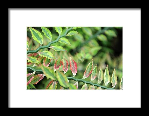 Blush Framed Print featuring the photograph Blushing Leaves by Jessica Rose