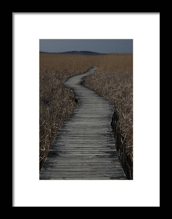 Landscape Framed Print featuring the photograph Boardwalk by Eric Workman