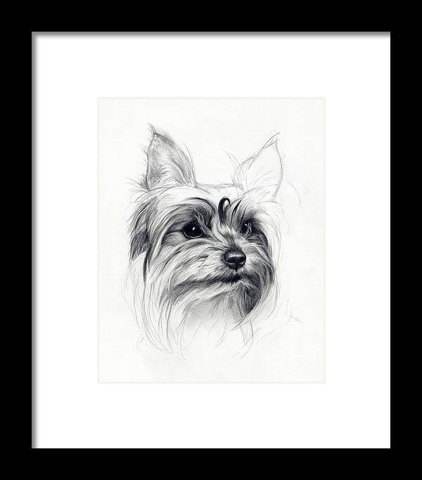 Dog Framed Print featuring the drawing Bobby by Tim Thorpe